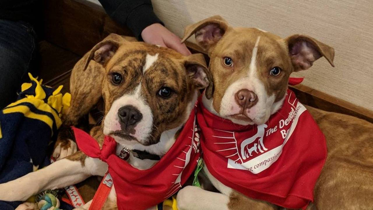 Puppies & Pints-Ann Arbor