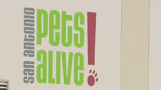 San Antonio Pets Alive offers 50 percent off adoption fees this weekend&hellip&#x3b;