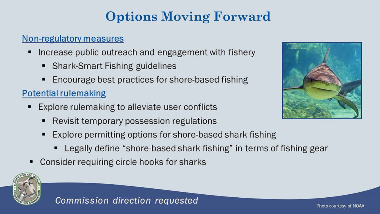 Shark regulations moving forward