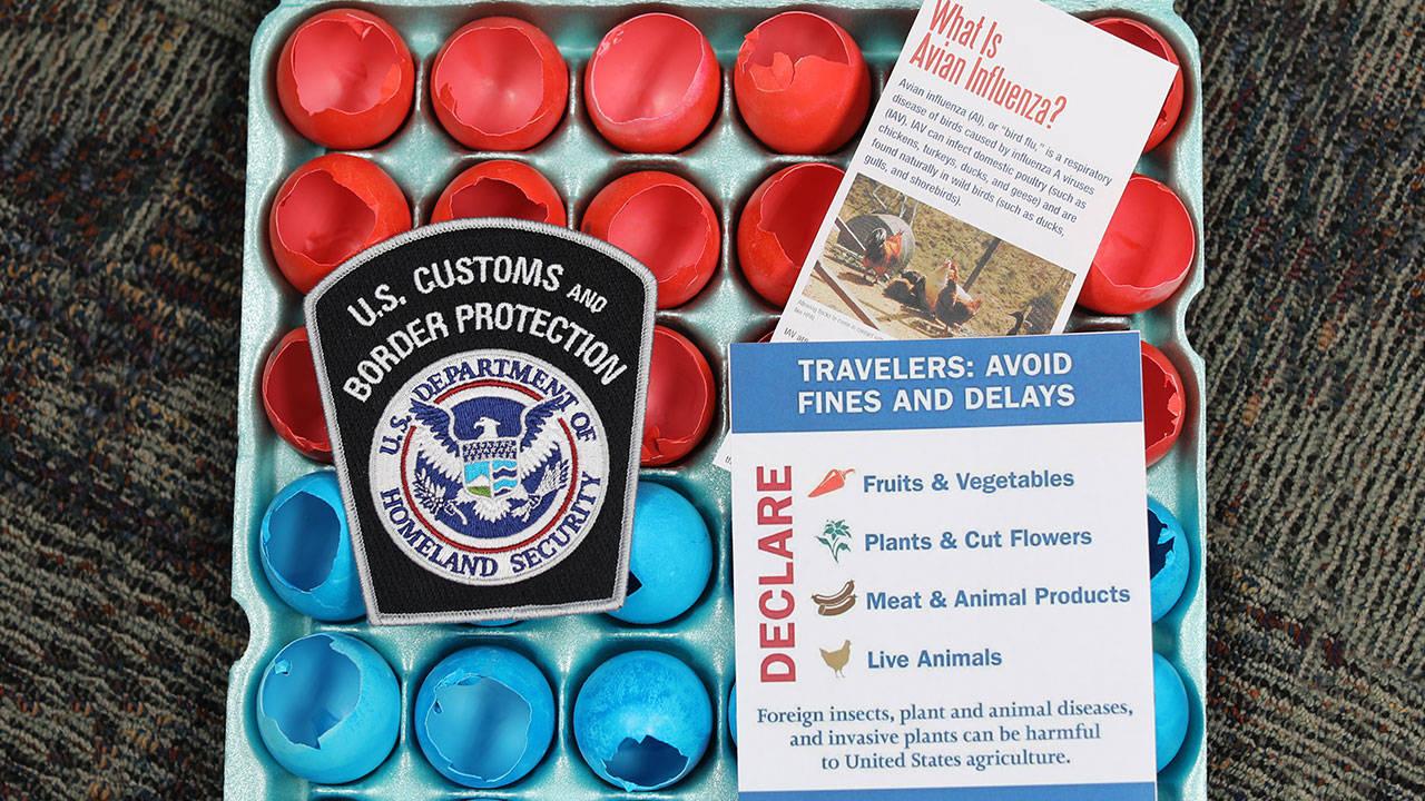 border-patrol-cascarone_1555691772740.jpg