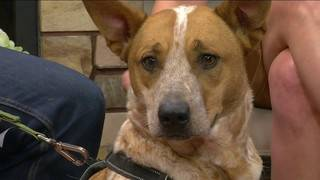Pet of the Week: Meet Octavia from Angels of Assisi