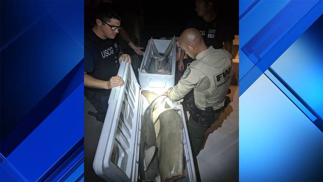 Coast Guard and FWC officials with dismembered sharks