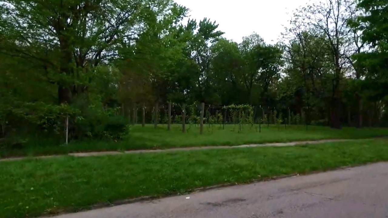 Detroit Vineyards field 3_1530620641408.jpg.jpg