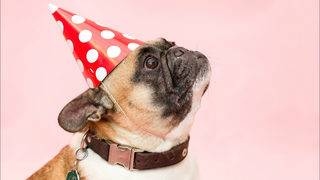 5 easy, delicious treats you can make for your dog at home