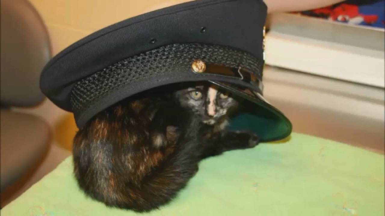 Livonia police officer rescues cat 3