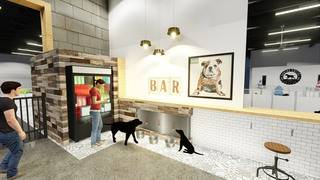 Dog park? Pooch-friendly bar? Kanine Social will be both
