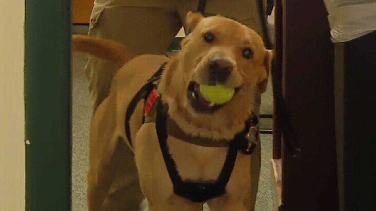 k9 ty with tennis ball