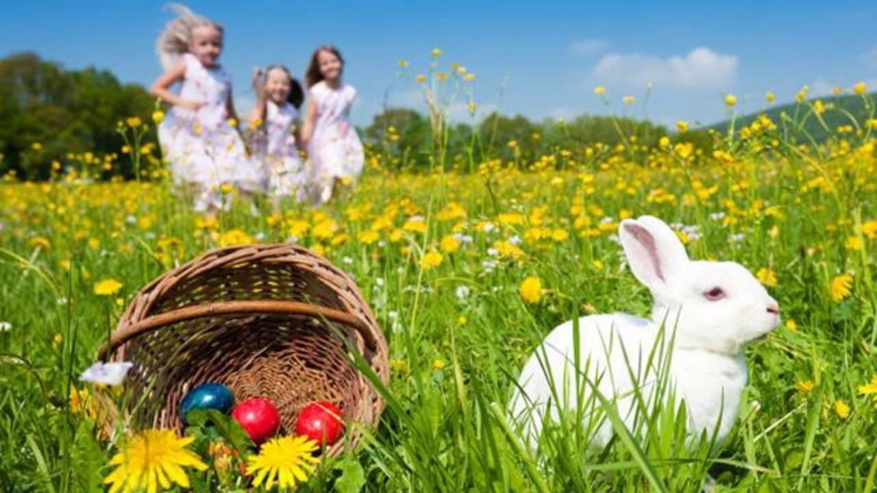 Easter bunny, eggs, basket_1942959607808990-75042528