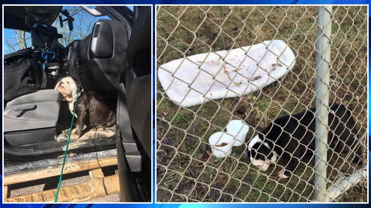 Bulldog abandoned in landfill Washtenaw County