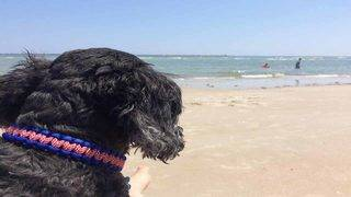 5 dog-friendly beaches in Central Florida