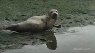 Fisherman spots wayward seal in NE Florida