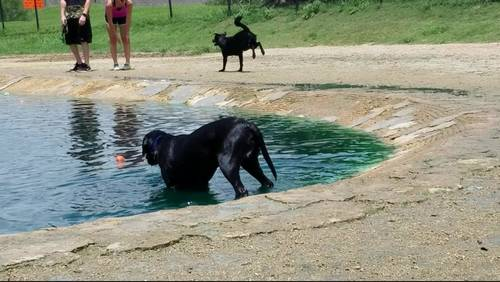 Tips for keeping your dogs safe at dog parks