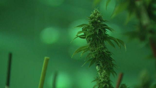 Detroit million-dollar marijuana bust 3