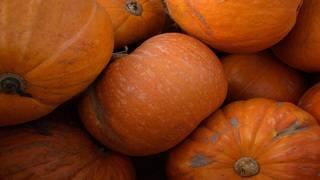 Teenie Weenie Halloweenie -- Oviedo