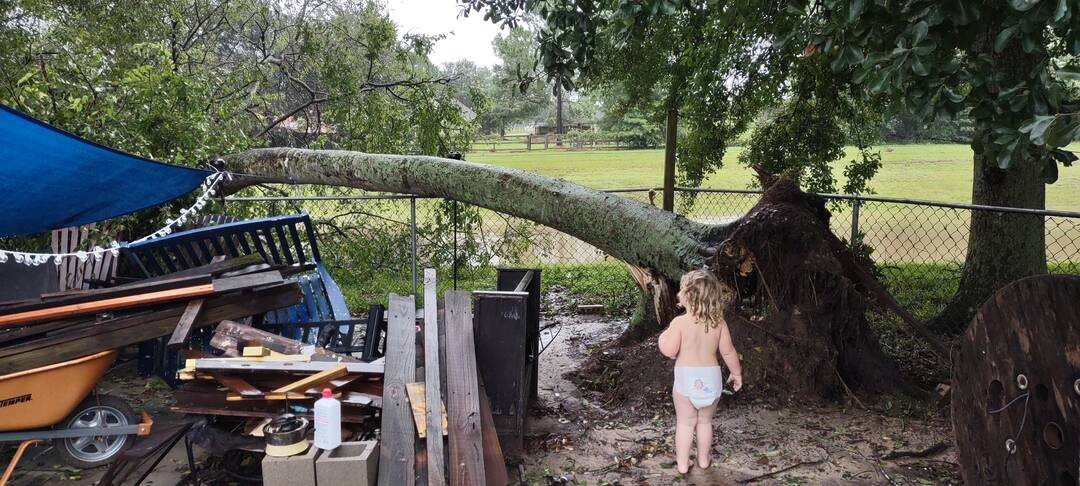 Uprooted tree in our back yard in League city