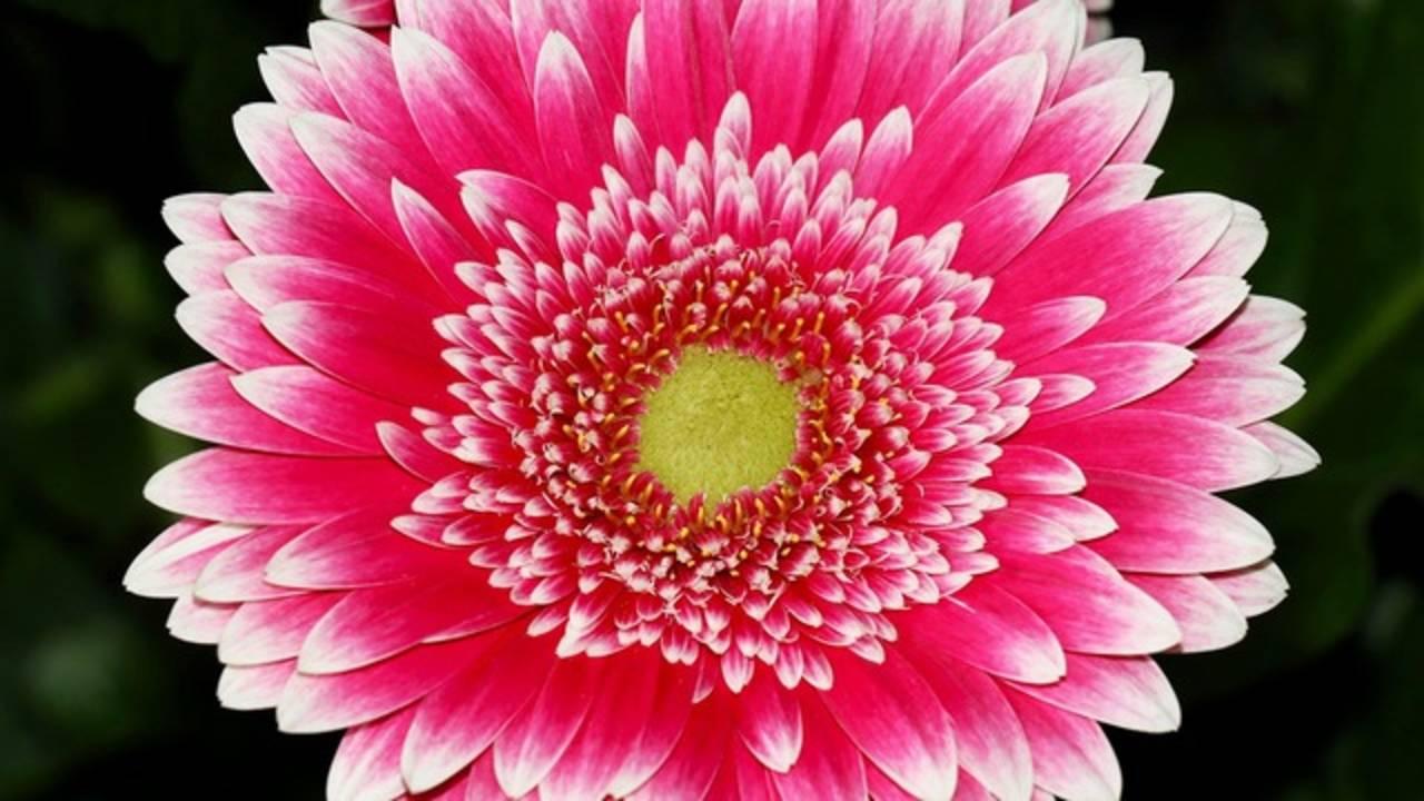 HEB flower 4_1522255179927.png.jpg