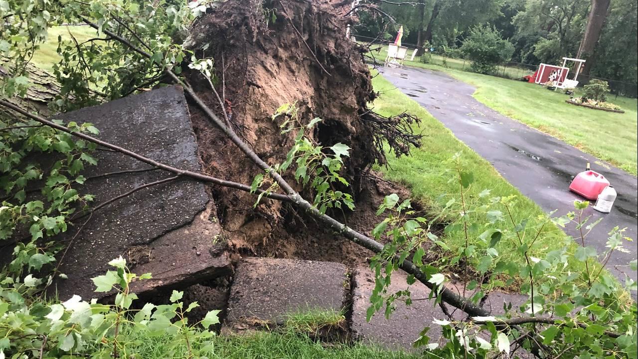 Southfield tree 1_1563678550149.jpg.jpg
