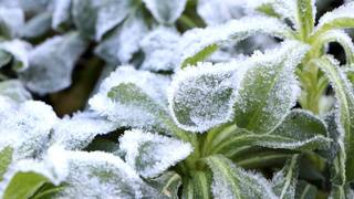 Frost, freezing temperatures hit Central Florida