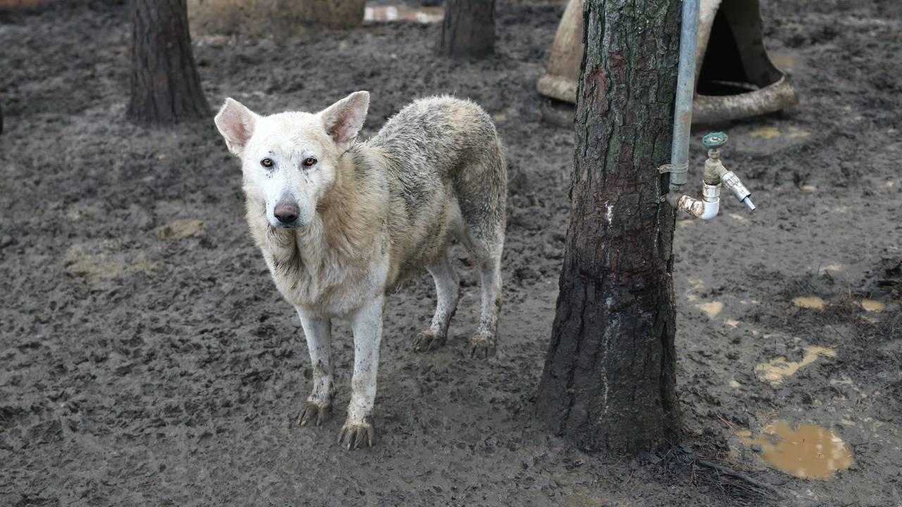 georgia neglected german shepherds 2_1546886025343.jpg.jpg