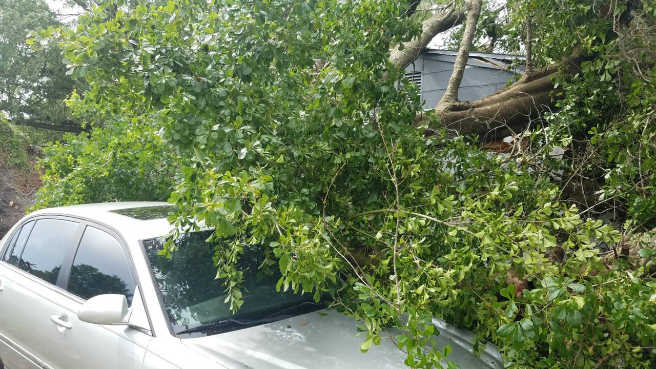 Tree onto car1_1523823603316.jpg.jpg