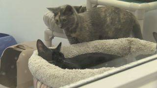 Danville Area Humane Society calling for help to get state bill passed