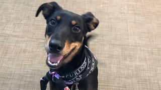 Adopt a pet: Meet Moana