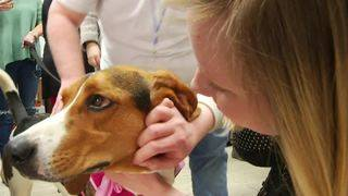 Franklin County Humane Society offers Valentine's Day puppy love