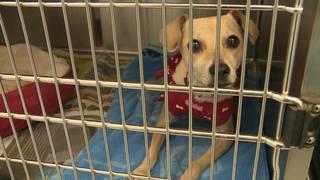SAPA! at capacity, asks for donations for animals' boarding fees