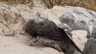 Do not disturb: Florida wildlife you should be careful around this spring