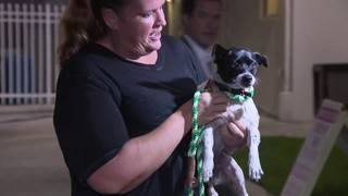 South Carolina shelter animals evacuated to Broward County