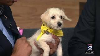 Pet of the week: Winnie