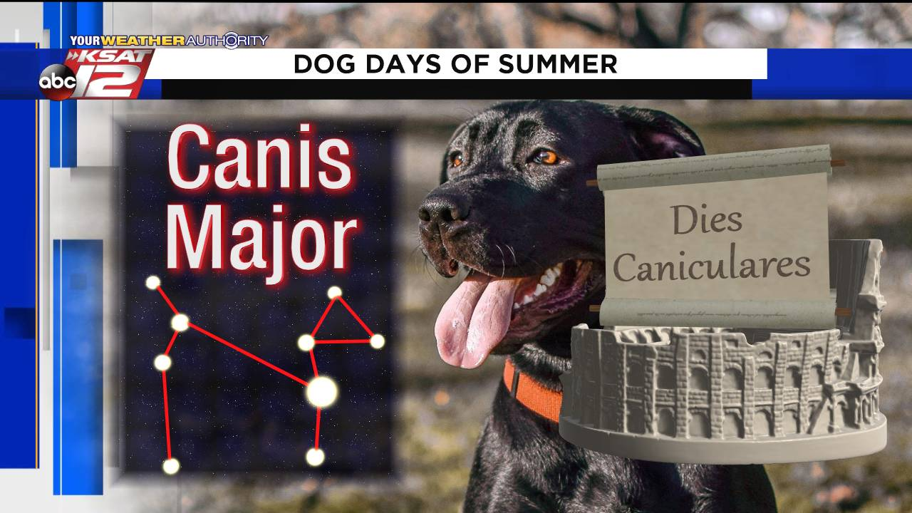 Dog Days_1564522545771.png.jpg
