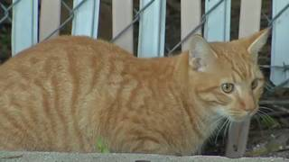 Grant aims to control 60,000 feral cat population in Osceola County