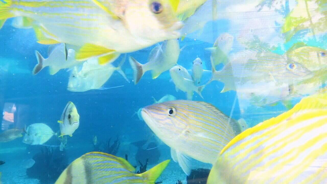 St.-Augustine-Aquarium