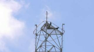 Man scales cellphone tower in Hialeah