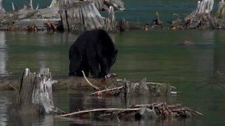 Al Bernie's Bears