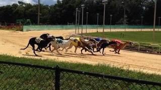 Greyhound trainer accused of treating dog inhumanely