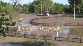 What you should know after Johnny Steele Dog Park floods again