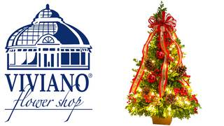Viviano Flower Shop Delux Boxwood Tree Contest (ends 12/20/17)