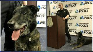 Sterling Heights K-9 Blitz retires after 11 years of service