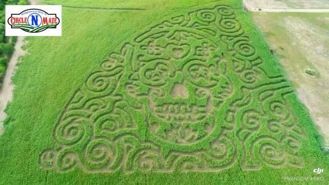 giant sugar skull corn maze opening in october