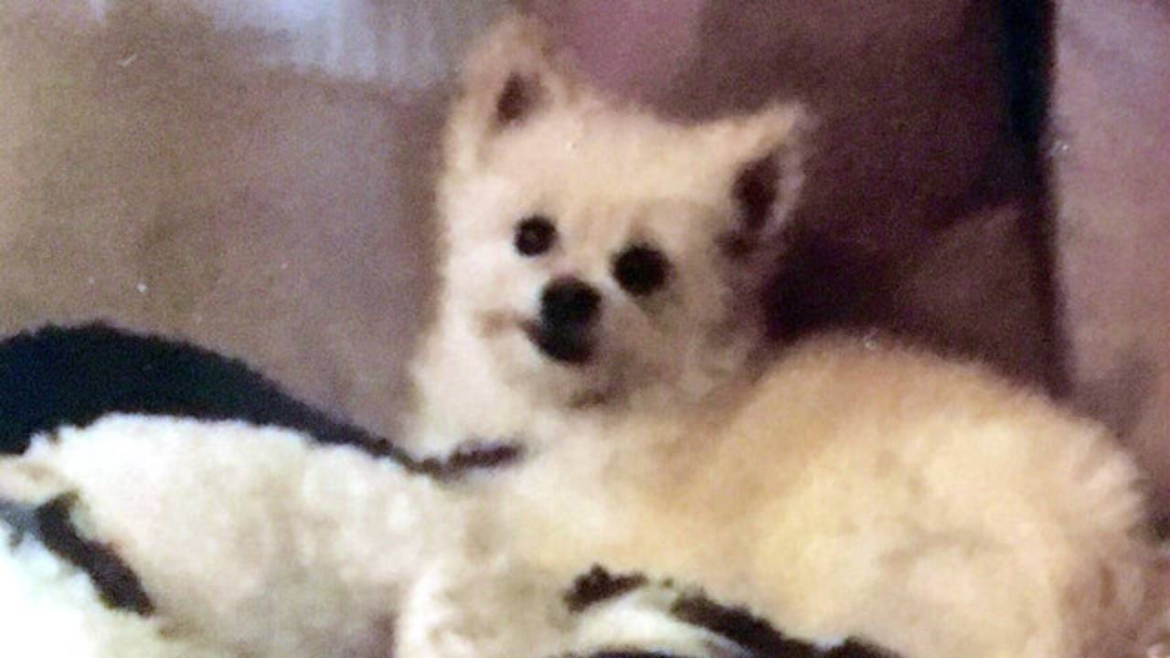 Bella the dog in Shelby Township