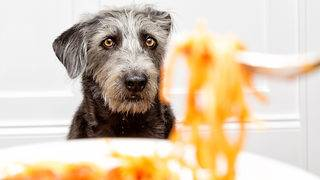 Human food that's OK for dogs to eat