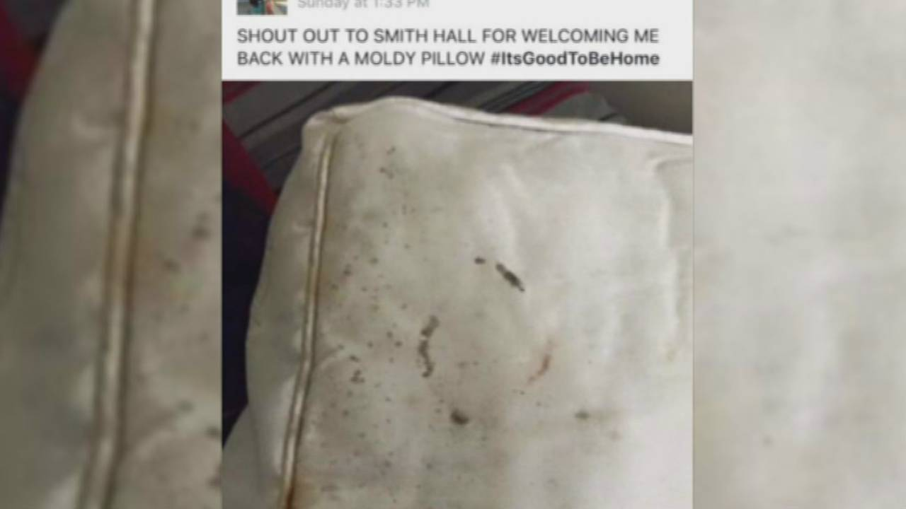 Moldy pillow at Smith Hall