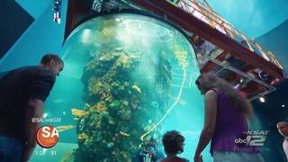 Have some family FUN at Moody Gardens this summer!