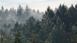 Reminder: Marijuana remains illegal in Michigan's National Forests