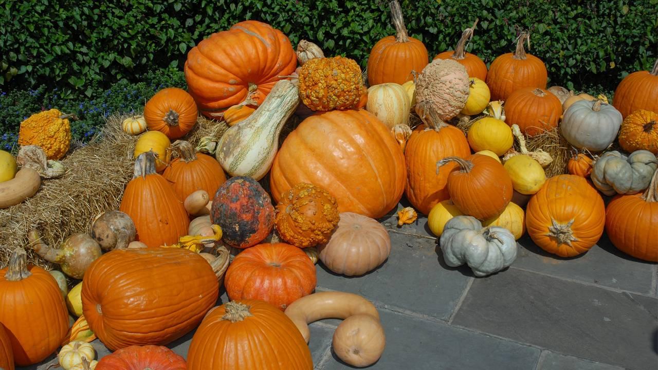 Pumpkins generic