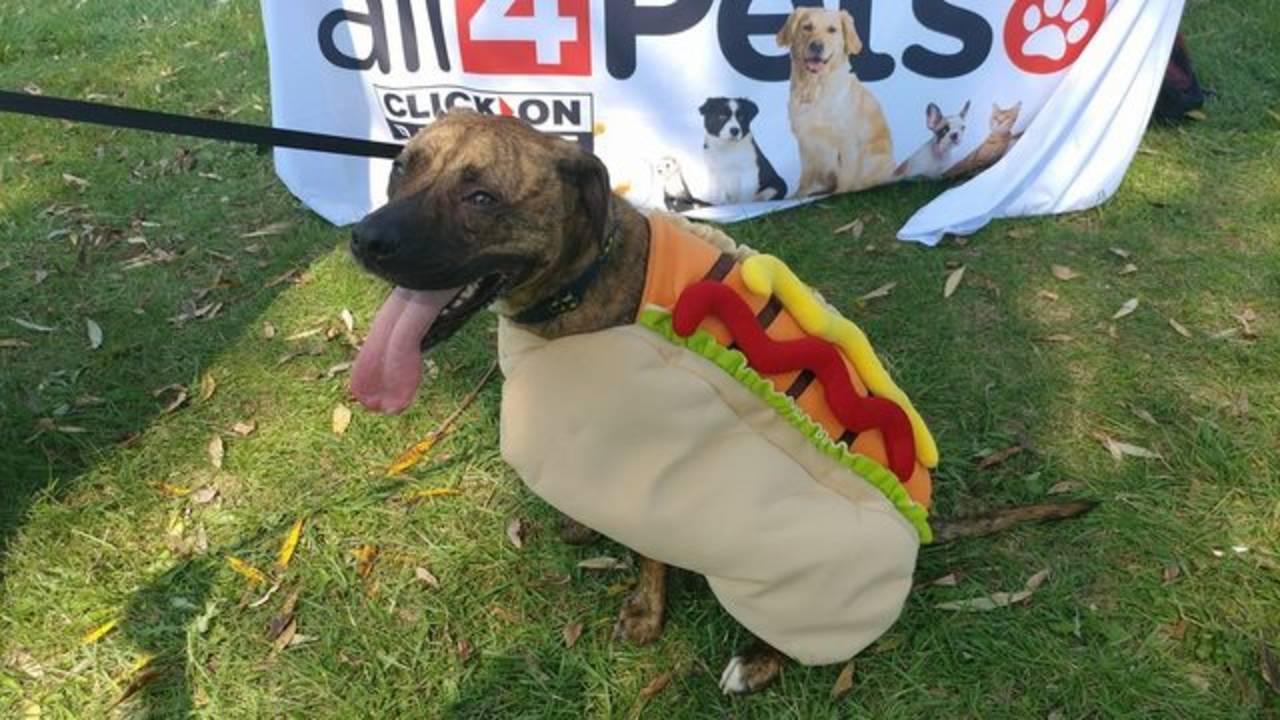 dog in hot dog costume barktoberfest 2017