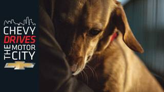 Pickups for Paws: Helping Our Furry Friends
