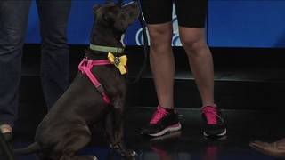 4's Pet Project: Free Pet Adoptions!